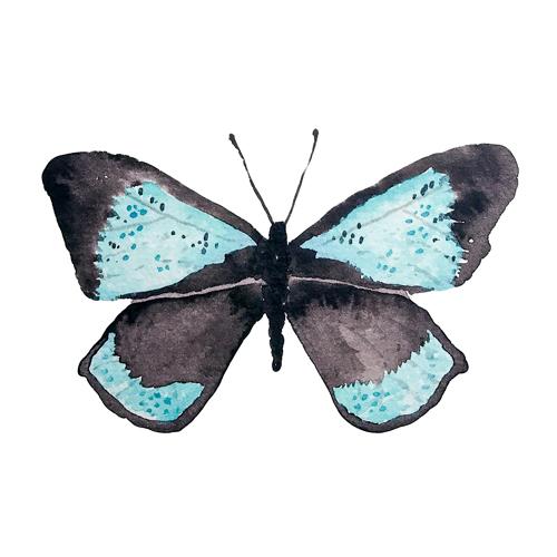 butterflies set1 0000 butterfly8