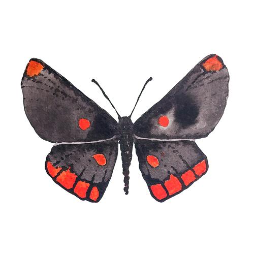 butterflies set1 0001 butterfly7
