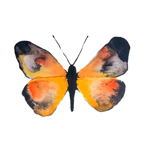butterflies set1 0002 butterfly6