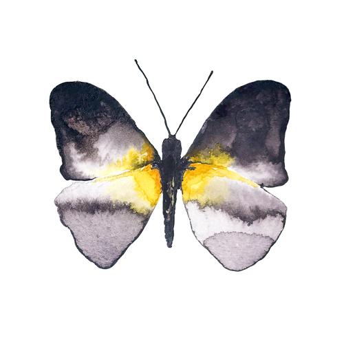 butterflies set1 0003 butterfly5
