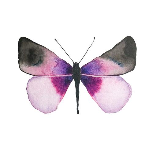 butterflies set1 0005 butterfly4