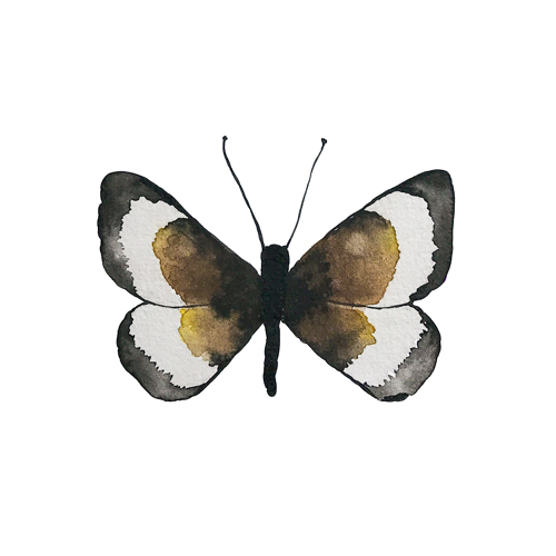 butterflies set1 0006 butterfly3