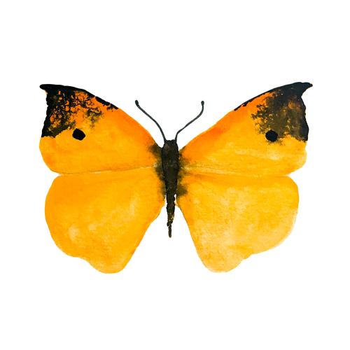 butterflies set1 0007 butterfly2