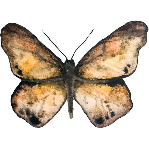 butterflies set1 0008 butterfly1